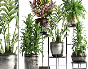 Collection Exotic plants 362 3D