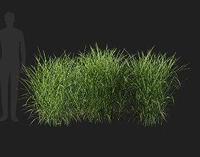 3D model Miscanthus Sinensis Zebrinus Zebra Grass-06
