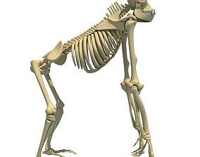 3D Gorilla Skeleton