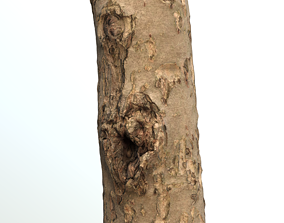 Thin apple tree trunk 3D asset