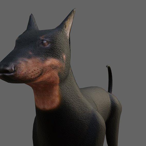 Dog Doberman