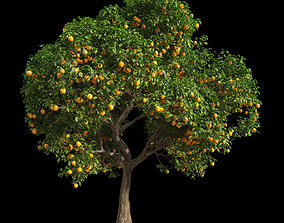 3D Orange Tree 9