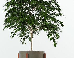 3D Plants collection 78 Modernica pots