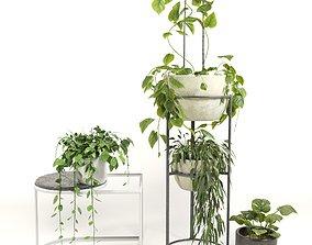 Indoor Plants 3D model