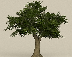 Game Ready Tree 08 3D model