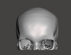 3D model Human Skull - female