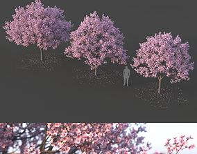 3D Sakura Tree Set