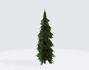 Cedar tree fan 3D asset
