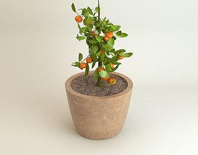 3D model Tree Mandarin Tangerine