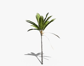 3D asset Coconut Palm Tree 16698