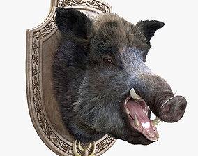 Wild boar head trophy 3D
