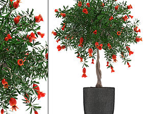 3D model Pomegranate Tree with Fruit