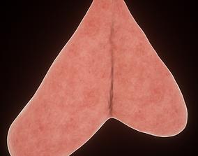 3D model thymus