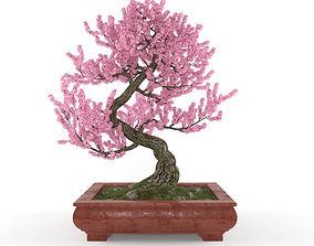 Sakura bonsai 3D model