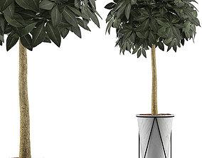3D Plants Collection 81