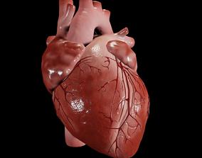 Animated human heart 3D asset