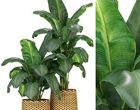3D Plants collection 311