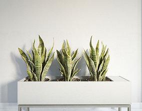 plant 26 am141 3D