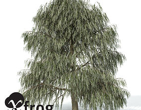 3D model XfrogPlants Weeping Willow