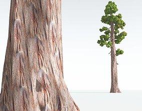 VR / AR ready EVERYPlant Coastal Redwood Cartoon 04 --12