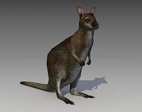 3D model Wallaby