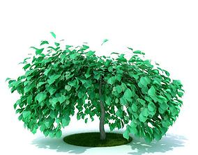 Green Leafy Plant 3D model