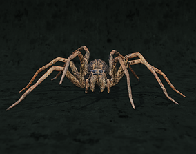 animated Realistic wolf spider rigged in 3d Blender model