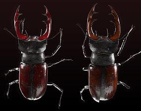 3D Lucanus cervus - Stag beetle