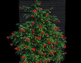 3D Rose plant set 33
