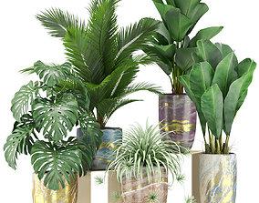 3D Plants collection 361