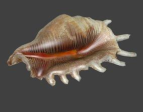 3D asset Low Poly Murex Seashell