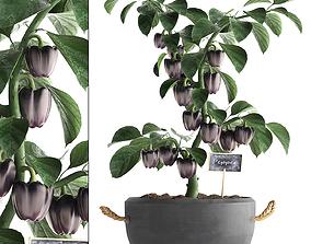decorative pepper 389 3D model