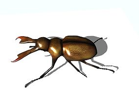 3D model low-poly stag beetle