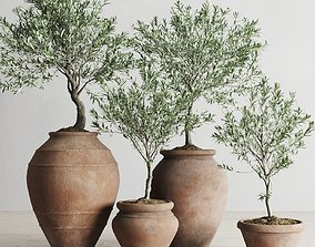 3D model Olive European In Antique Clay Vessels