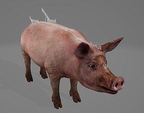 Pig Organ 3D asset