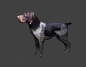 3D model animated Deutsch Drahthaar Hunting Dog