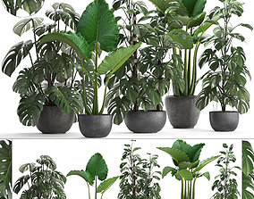 Collection Exotic plants Monstera 3D model