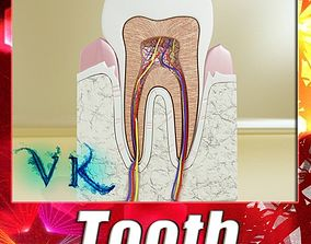 Tooth High Detail 3D model
