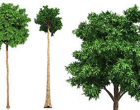 Flooded Gum Tree 3D model