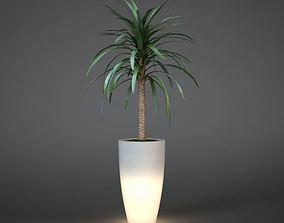 Tropical Potted Palm Plant 3D