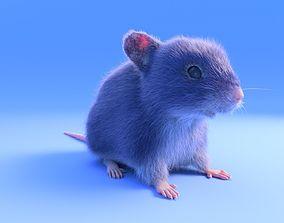 3D model Mouse - grey brown white fur - rigged - realistic