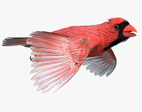 3D model Northern Cardinal - rigged - animated
