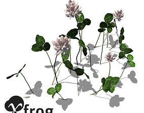 XfrogPlants White Clover 3D model