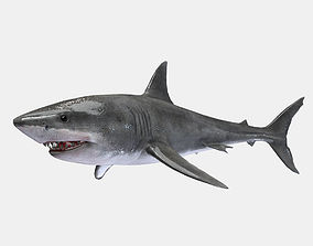 3D asset Great White Shark