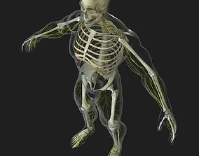 3D model Human Central Nervous System with Skeleton