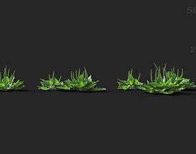 Plantago major Broadleaf plantain 01 Growfx and 3D model