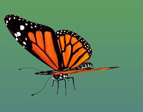 3D model Butterfly in some formats