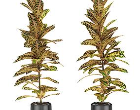 3D model Plant in Pot Flowerpot Exotic Plant flowerpot