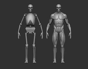 3D printable model Musculature simplified