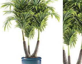 3D palm plant 148